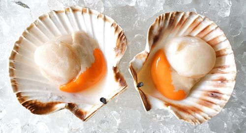 What Are Scallops - What Do They Eat?